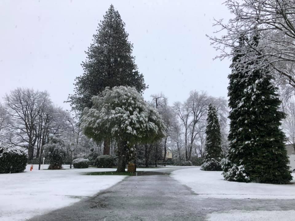 Geraldine in snow 2